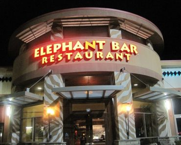 elephant bar survey