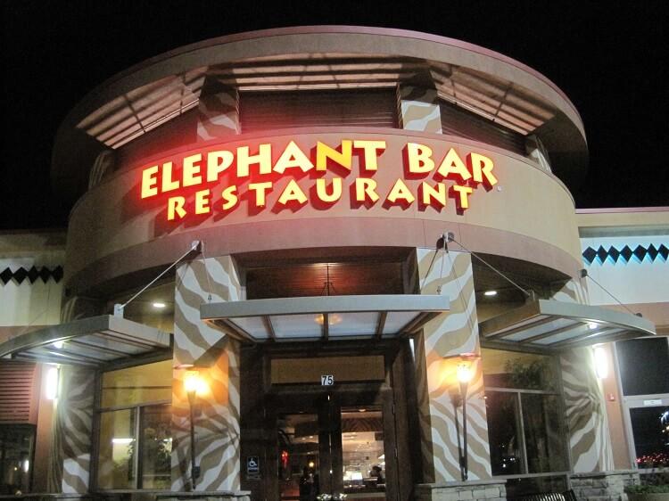 elephant bar survey